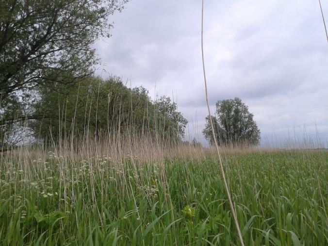 Elbe marsh